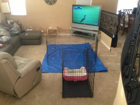 Xpen Puppy Pen Setup with Tarp - Bringing Puppy Home