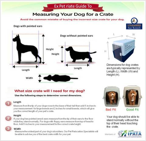 Measuring your dog for a crate