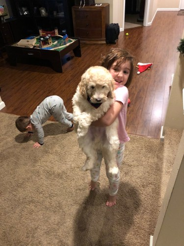 Labradoodle Puppies and Young Children
