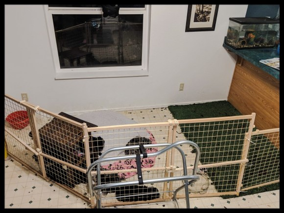 Puppy Xpen Setup with Grass Pad and baby gates in kitchen