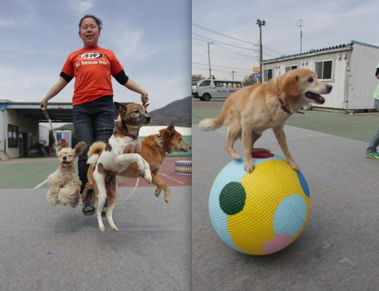 The Super Wan Wan Dog Circus in Tsukuba City, Japan