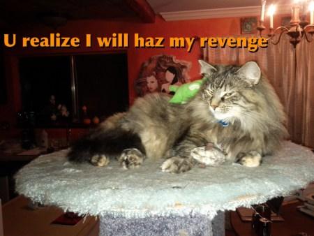 lenora on the cat condo