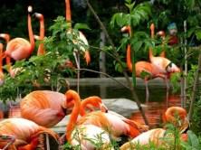 Flamingos Gruppe