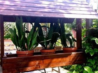Pflanzen überdacht