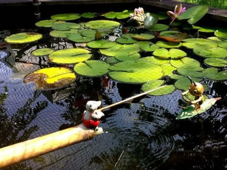 Idylischer Teich im Kleingarten