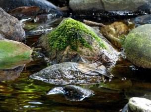 Moos im Flussbett
