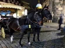 Wunderschöne Pferde