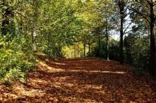 Waldweg Herbststimmung