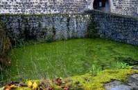 Teich an der Burg Stolpen