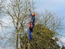 Strickleiter und Baumarbeiter