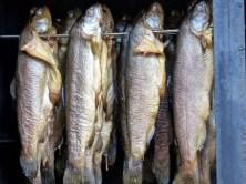 Fische geräuchert