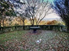 Bäume Mauer Laub Hund