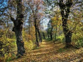 Waldweg Herbst Laub Bäume
