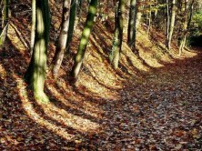 Waldweg Laub Bäume