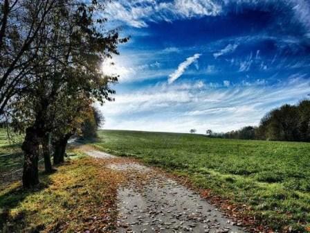 Feld Bäume Himmel Wolken
