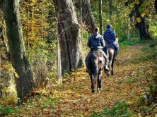 Waldweg Reiter Pferde Ausflug