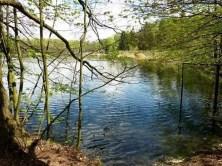 See Ufer Bäume Wald