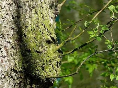 Baum Äste Wald Rinde