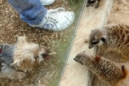 Erdmännchen und Hund Wildpark Osterzgebirge
