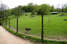 Gehege Wildpark Osterzgebirge