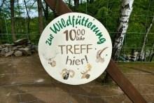 Wildfütterung Wildpark Osterzgebirge