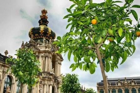 Einzug der Orangen im Dresdner Zwinger