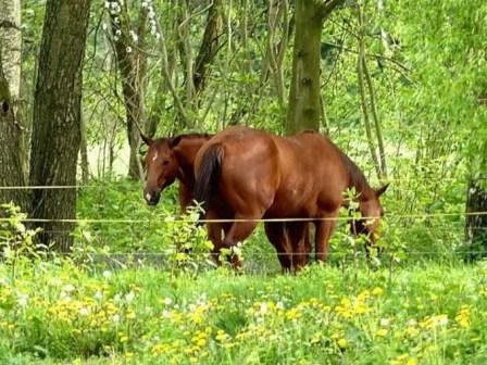 Zschopautal Pferde