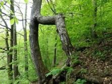 Natur Wald Baumwuchs