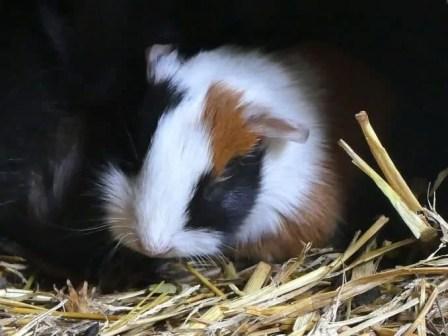 zoo-minis-aue-005