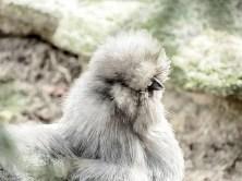 zoo-minis-aue-032