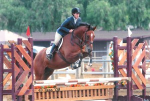4yr Zweibruecker sold as foal