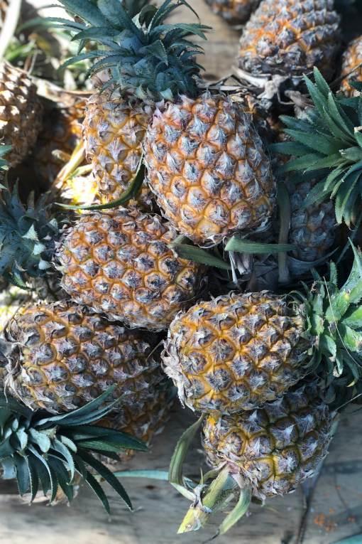 Pineapple-leaves-jacket
