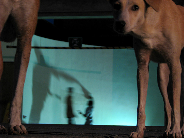 mongrel shadows
