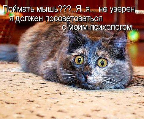 Неуверенный кот