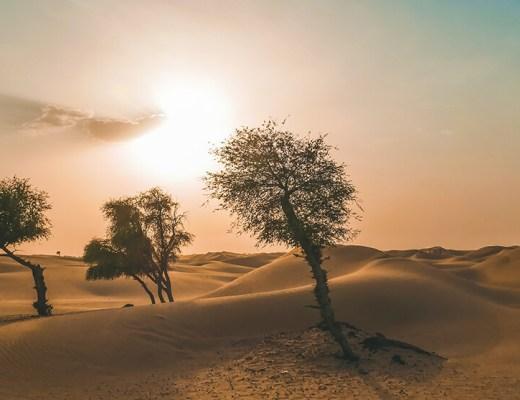 Bäume in der Wüste