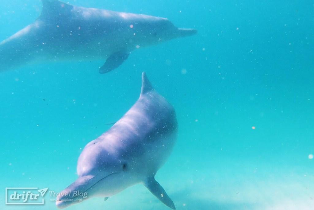 Delfine hautnah auf North Stradbroke Island