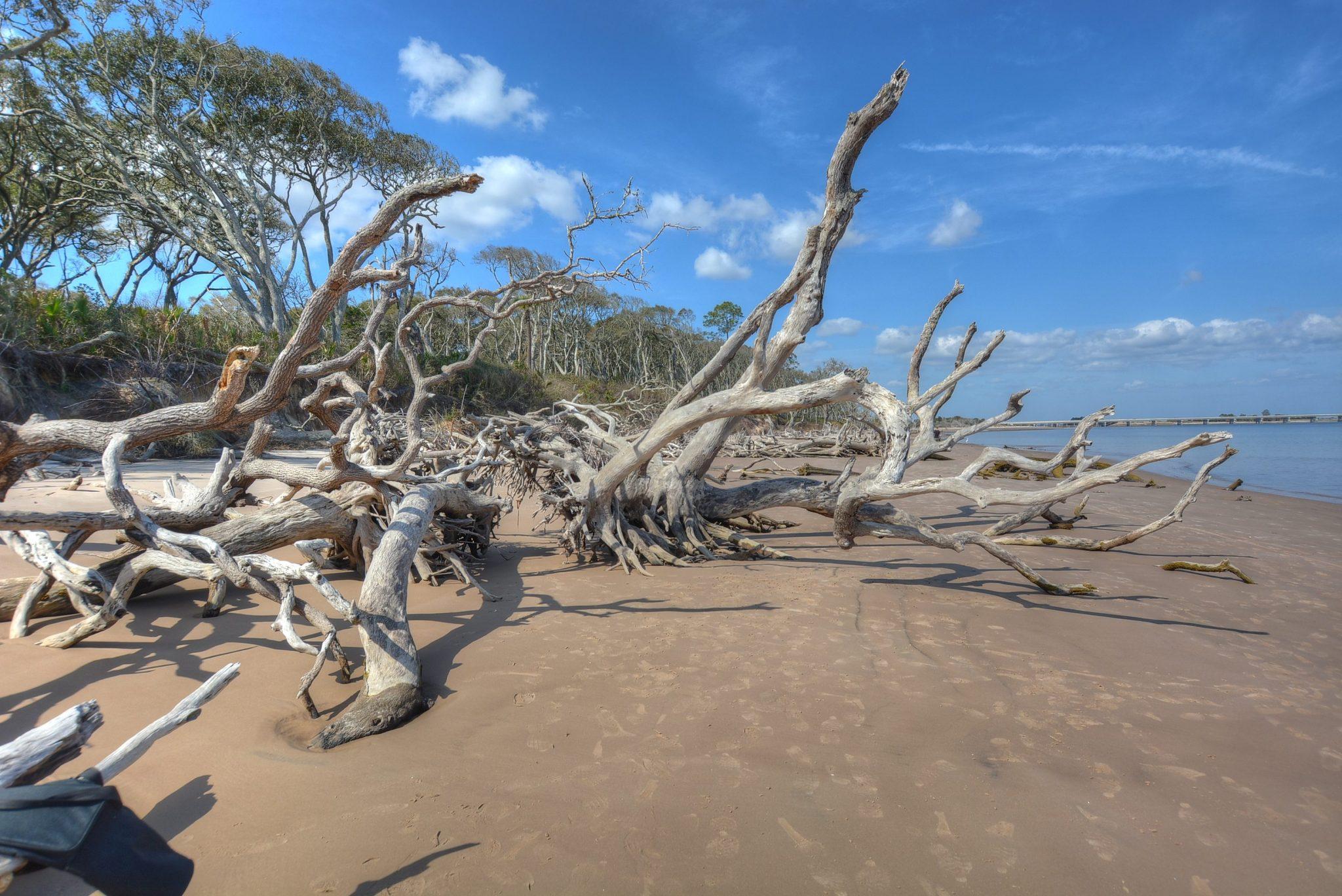 The Boneyard….where fallen trees become driftwood