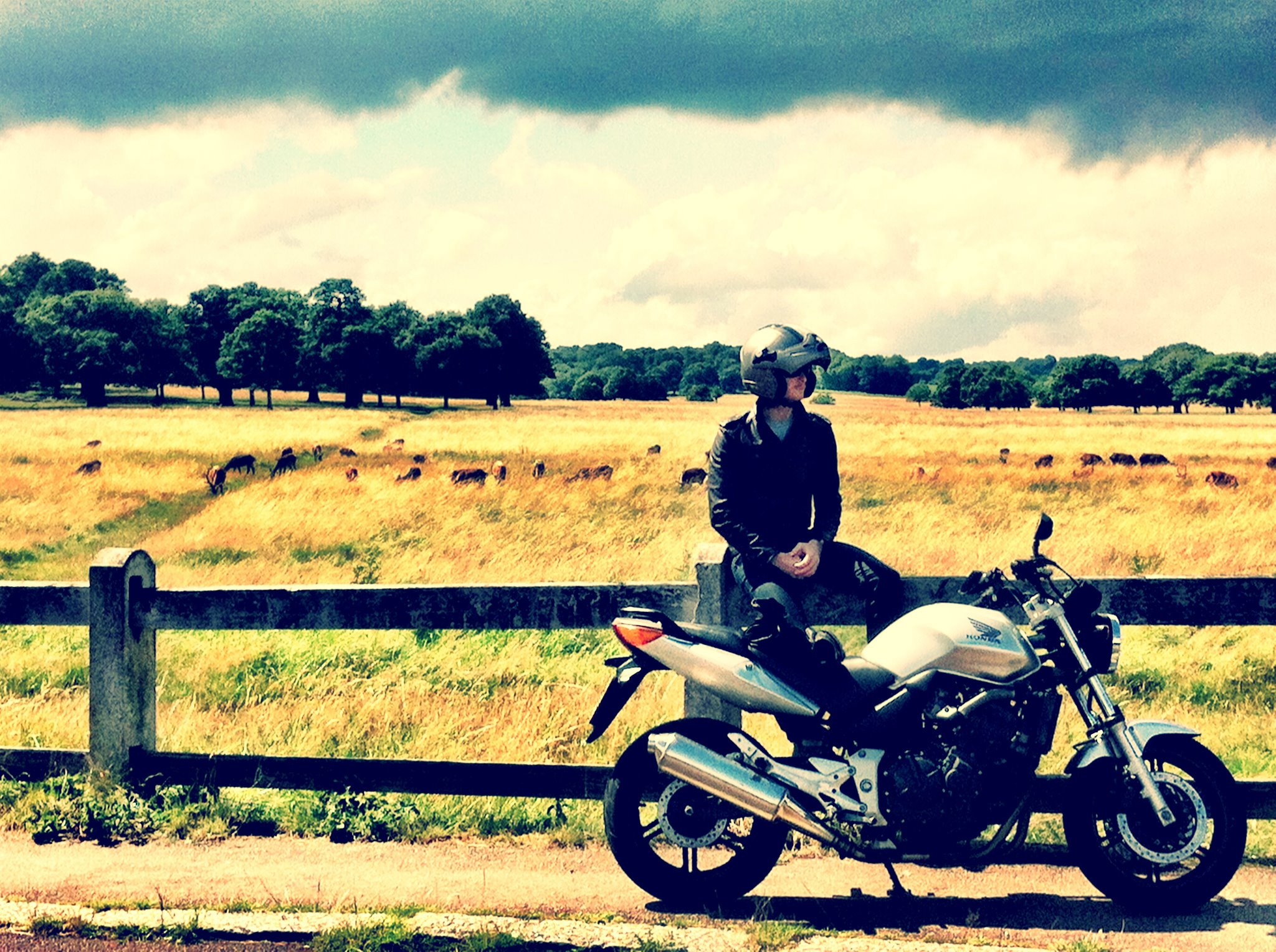 Riding my Honda motorcycle around RIchmond park in the summer. We stopped on to watch the deer.