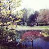 JapaneJapanese Kyoto Gardens, Kensington, Londons Kyoto Gardens, Kensington, London