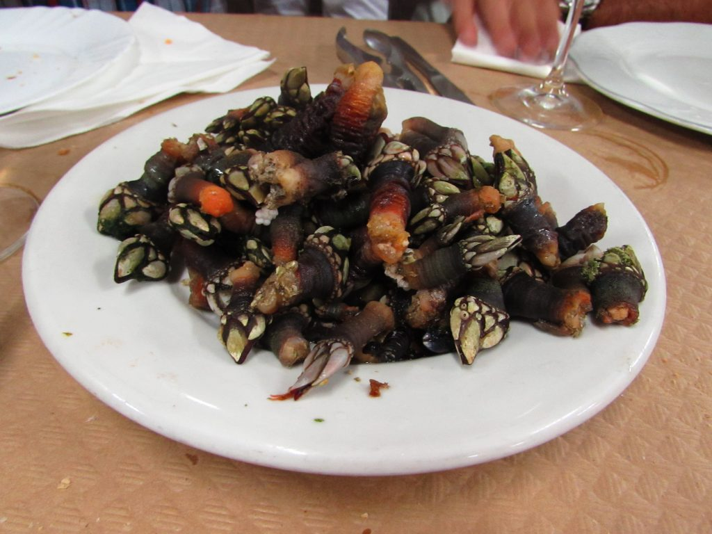 "Percebes ~ ""Goose-Neck Barnacles"" in Asturias"