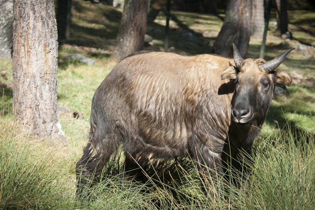 Bhutan Wildlife