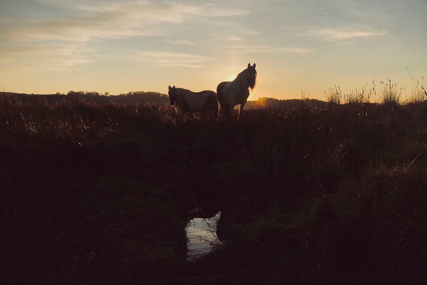 Wild horses on the Gower marshes in South Wales - by Ben Holbrook from DriftwoodJournals.com2