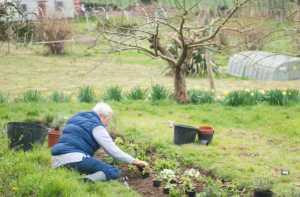 Kenward Trust Garden