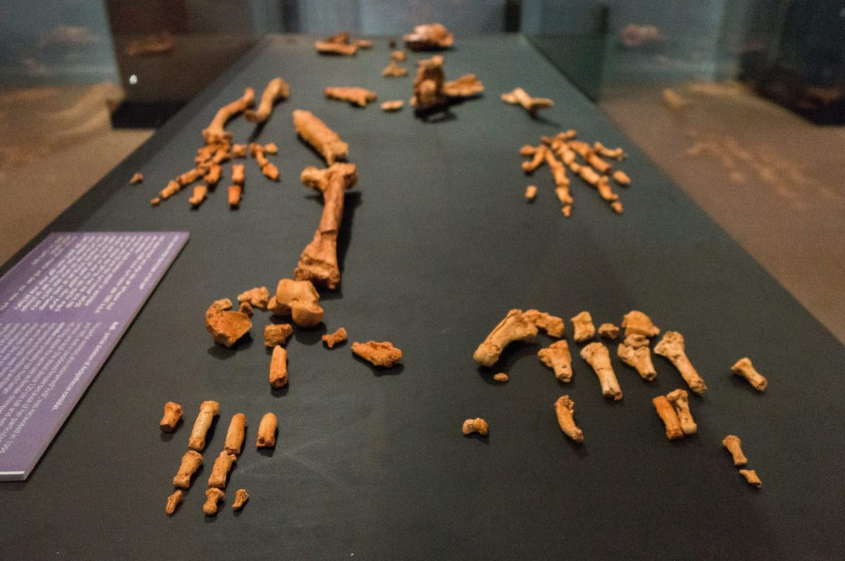 Things to do in Addis Ababa, including seeing historic fossils