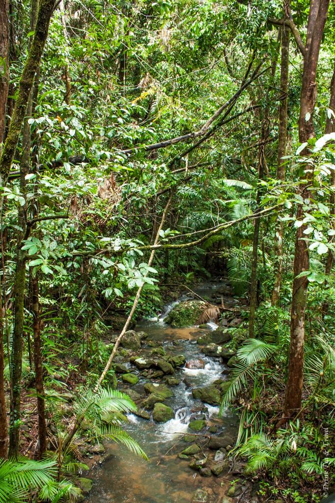 Daintree National Park, Northern Queensland