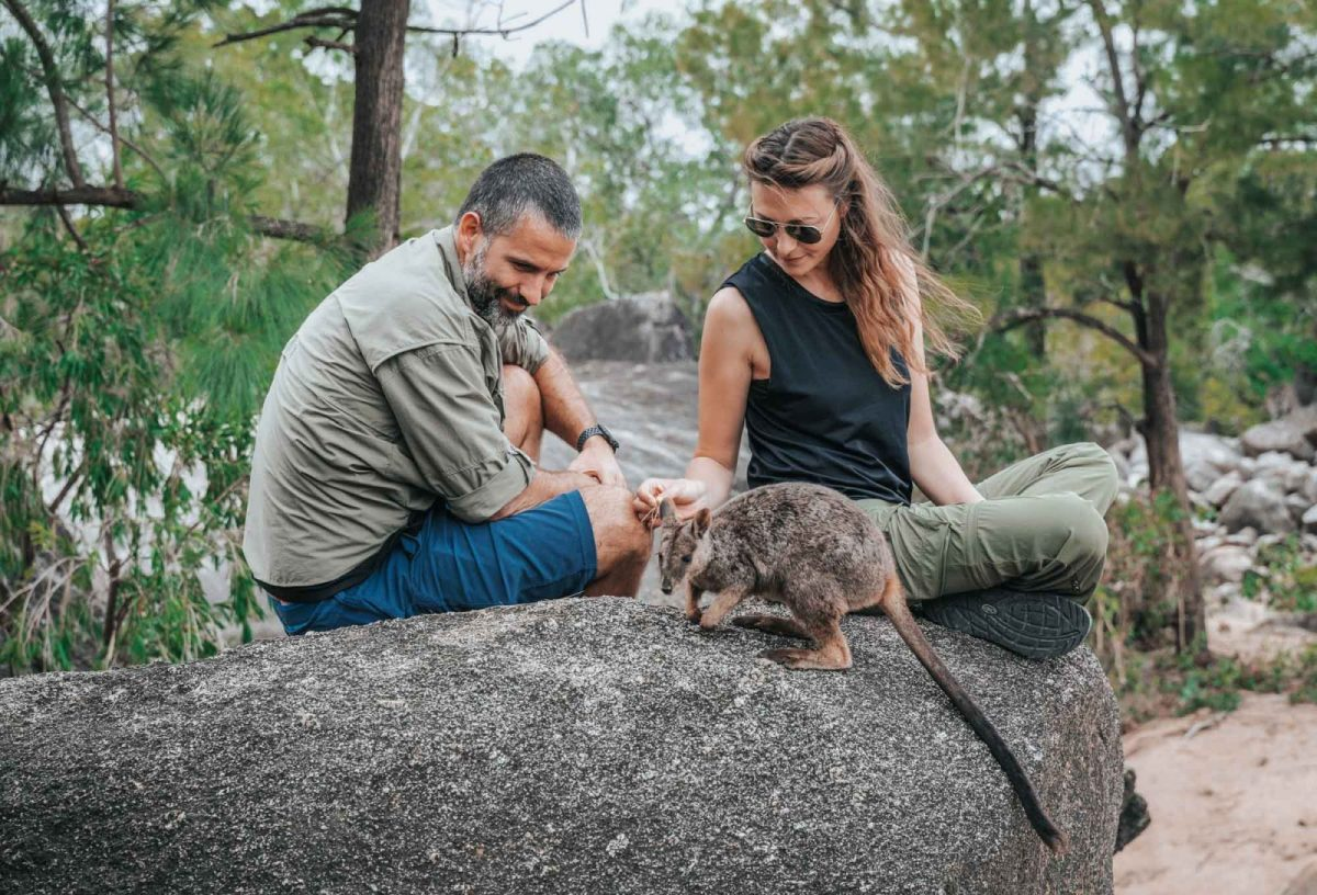 Hanging out with a wallaby at the Granite Gorge Nature Park in Atherton Tablelands
