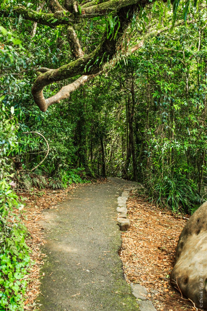 The Ultimate Day Trip to the Gold Coast's Springbrook