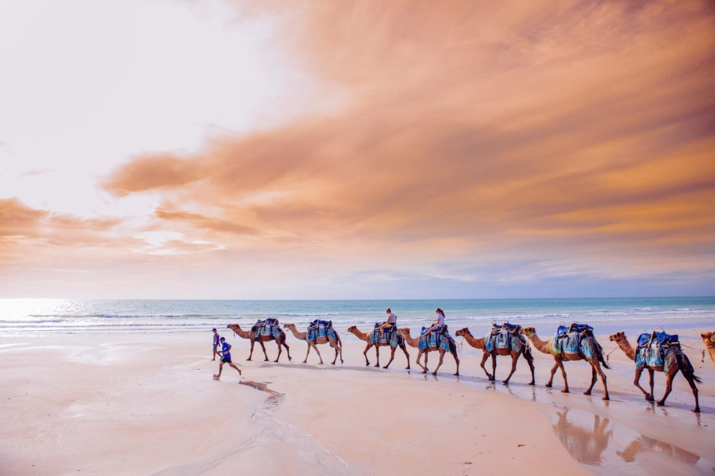 Camel rides along Cable Beach at sunset, Broome, Western Australia