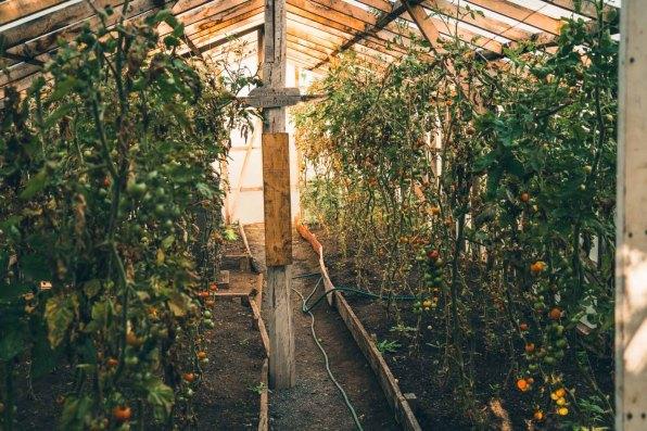 Chile Las Torres Hotel garden-0825