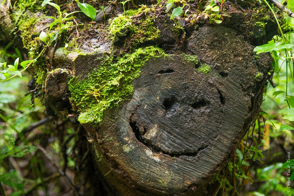 Even the trees are smiling in Costa Rica